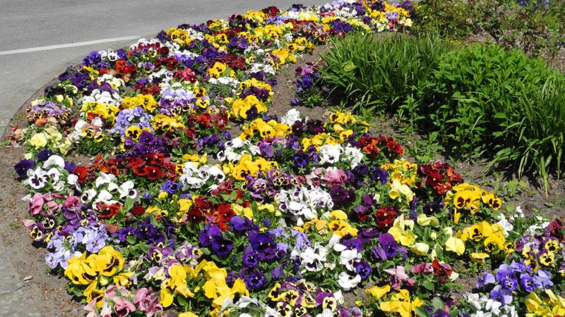 Bont Gartenbau Öffentliche Rabatten